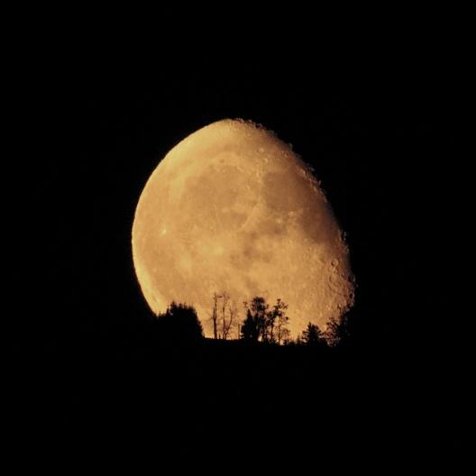 Moonrise_behind_Trees[1]